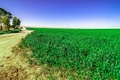 Picture nature, path, grass, Nature, greens, field, field, green, grass, track, landscape