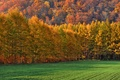Picture field, autumn, forest, grass, trees, mountains, slope