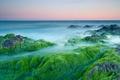 Picture algae, stones, the ocean, dawn