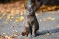 Picture autumn, cat, look, bokeh