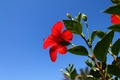 Picture the sky, red, flower, blue