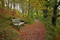 Picture path, shop, bench, autumn, forest, leaves