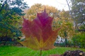 Picture Autumn, Nature, tree leaf