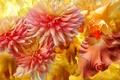 Picture flowers, flowerbed, petals, line, garden