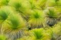 Picture paint, nature, Between lancelin, Western Australia, the wind, grass