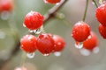 Picture macro, berry, red, cherry, drops
