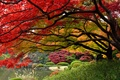 Picture Japan, Tokyo, the colors of autumn, Japanese garden, December