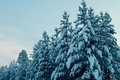Picture cold, winter, autumn, snow, Russia, Noyabrsk, YANAO, Yamal, tundra