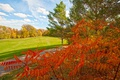 Picture autumn, grass, leaves, trees, Park, track, the crimson