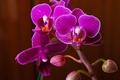 Picture flowers, plants, Orchid