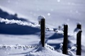 Picture snow, fence, snow, winter, nature, the fence, nature, winter