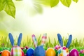 Picture eggs, flowers, toy, rabbit, sunshine, rabbit, Easter, grass, bunny, spring, eggs, meadow, meadow, grass, easter, ...