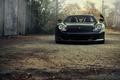 Picture Porsche, Porsche, porsche, bird, Carrera GT, car